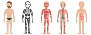 inglés para niños las partes del cuerpo en inglés